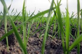 ubezpieczenia rolne pzu