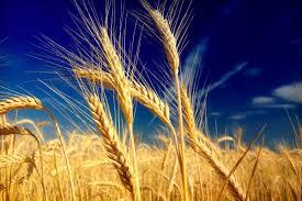 ubezpieczenia rolne w PZU